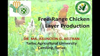 free range chicken layer production