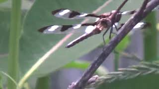 Dragonfly on my pond