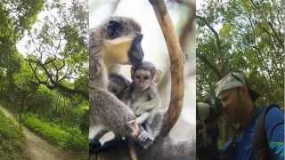 Bijilo Forest Park: I Found Monkeys! - The Gambia thumbnail