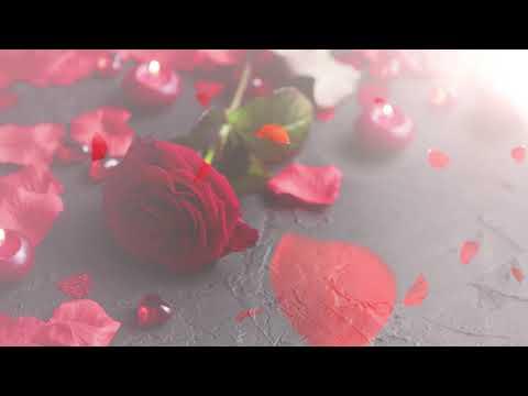 Intro hoa hồng đẹp