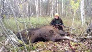 Elämäni ensimmäinen ja toinen hirvi -1st & 2nd moose in my life