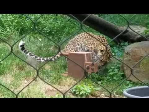 Animal enrichment day at Baltimore zoo