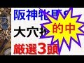 2019阪神牝馬S~★ミエノサクシード推奨★大穴狙えるレースはこの3頭に注目!【競馬予…
