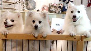 番組提供:ペットライン株式会社 http://www.petline.co.jp/ ふわふわ純...