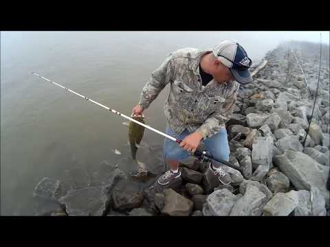 Flathead CATFISHING on the Ohio River from YouTube · High Definition · Duration:  18 minutes 25 seconds  · 71,000+ views · uploaded on 6/8/2015 · uploaded by Steve Douglas The Catfish Dude