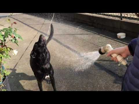犬の水浴び/Bathing dog.