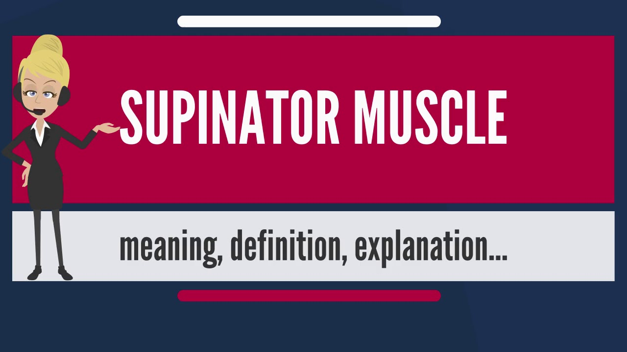 What Is Supinator Muscle What Does Supinator Muscle Mean Supinator