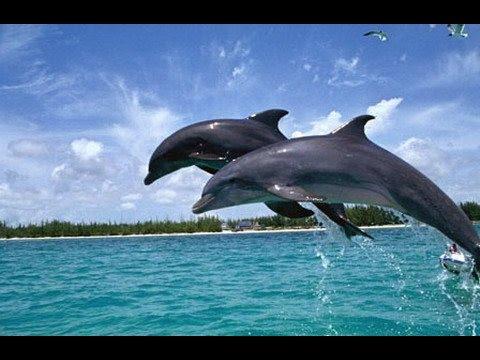 Lighthouse 3d Live Wallpaper Dolphins At Chilika Lake Odisha Part 1 Youtube