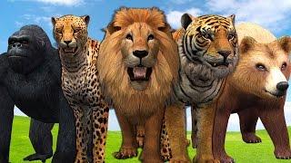 Animals Finger Family Collection For Children | Lion Finger Family Nursery Rhymes | Gorilla Cartoons