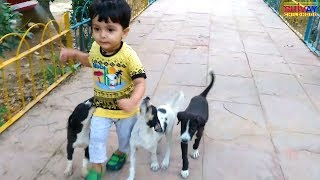 Cute Puppy chase kid to bite funny video | Animals video for children