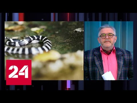 Немного о вирусе: при чем тут змеи - Россия 24