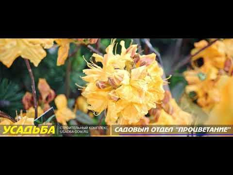 Саженцы, цветы, рассада в ТК Усдьба