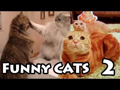 Best Funny Cat Videos #2   Try Not to Laugh Compilation 2019