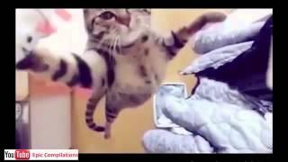 Приколы про кошек. Бесплатно. Видео!