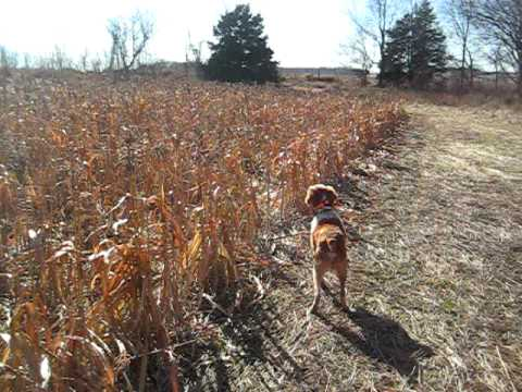 Hunter and the Pheasant