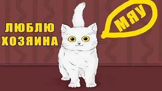 Как ведет себя кот, если любит своего хозяина