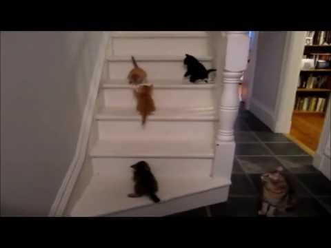 Cute Cats Falling down stairs