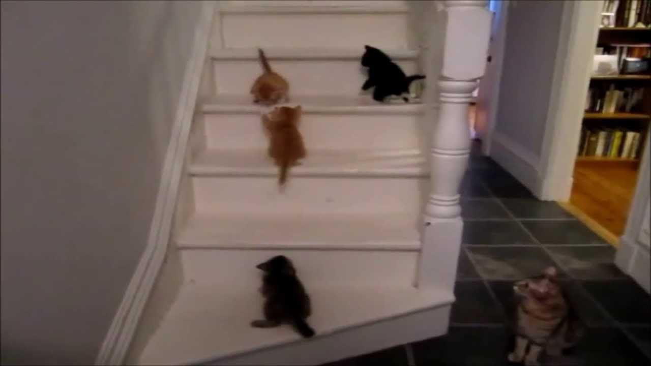 Dog Can T Go Down Stairs