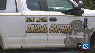 Video: Man arrested after dog found dead inside hot car