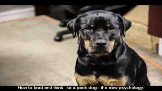 Pictures Of Rottweilers Breeders