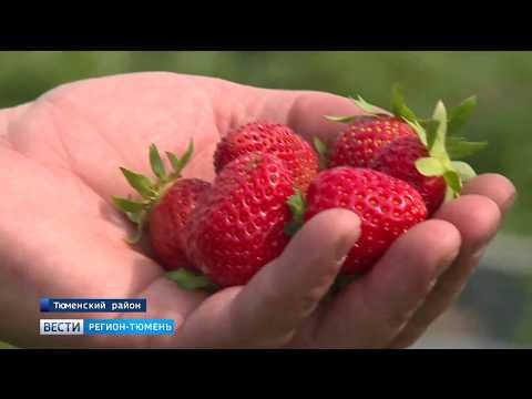 Тюменский фермер решил превратить Ембаево в Голландию