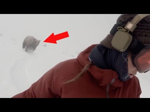 SNOWBOARDER GIRL CHASED BY BEAR - Real or Fake?