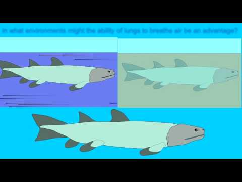 ADVANTAGES FOR DEVONIAN FISH ADAPTING TO LAND 1