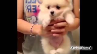 Улетные приколы с людьми и животными) Свежее видео Октябрь 2013