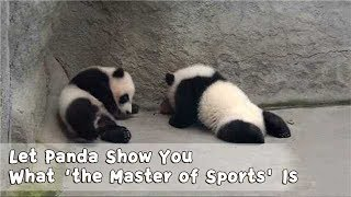 Check This Out! Let Panda Show You What 'the Master of Sports' Is | iPanda