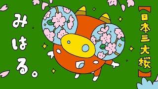 【三春町】もっと 知って ふくしま!第2弾 三春滝桜【6秒】
