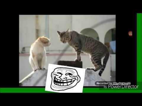 Vidéo chat drôle gros mots!!smaylet cool REGARDER SVP