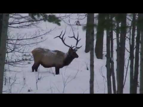 MY Northern Michigan Wildlife Nature ADVENTURE