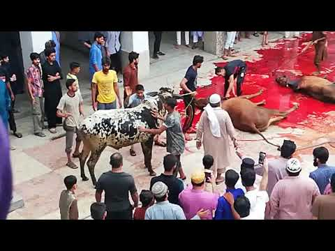 Eid Ul Adha 2018 Qurbani @ Jamia Naeemia Mosque Lahore