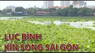 (VTC14)_Lục bình bủa kín sông Sài Gòn