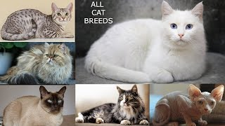 All Cat Breeds in the world  all domestic cat species AZ cats types  total cats breeds  cats