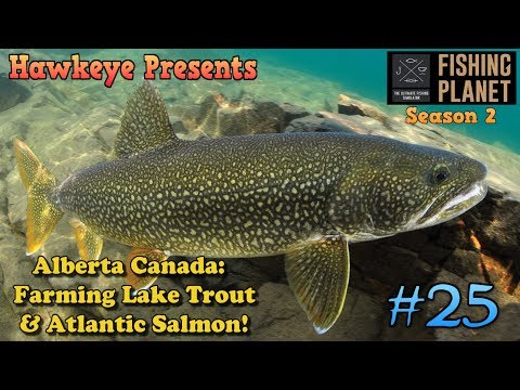 Fishing Planet S2 - Ep. #25: Alberta Canada: Farming Lake Trout & Atlantic Salmon!