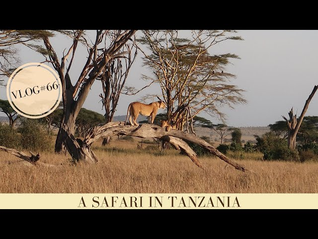 Safari holiday in Tanzania | Wildlife Safari Tanzania | Makasa Tanzania Safari | VLOG #66