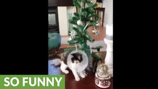 High-energy kitten totally destroys Christmas tree