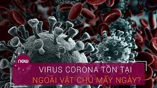Virus Corona có thể tồn tại ngoài vật chủ mấy ngày? | VTC Now