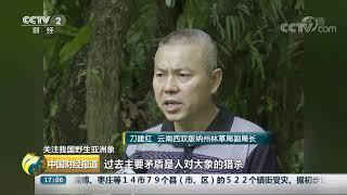 [中国财经报道]关注我国野生亚洲象 如何缓解人象冲突| CCTV财经