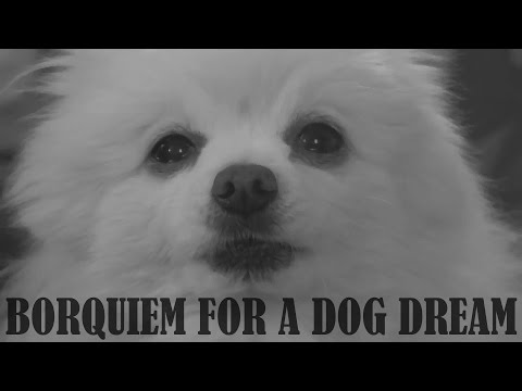 Gabe the Dog - Borquiem for a dog dream