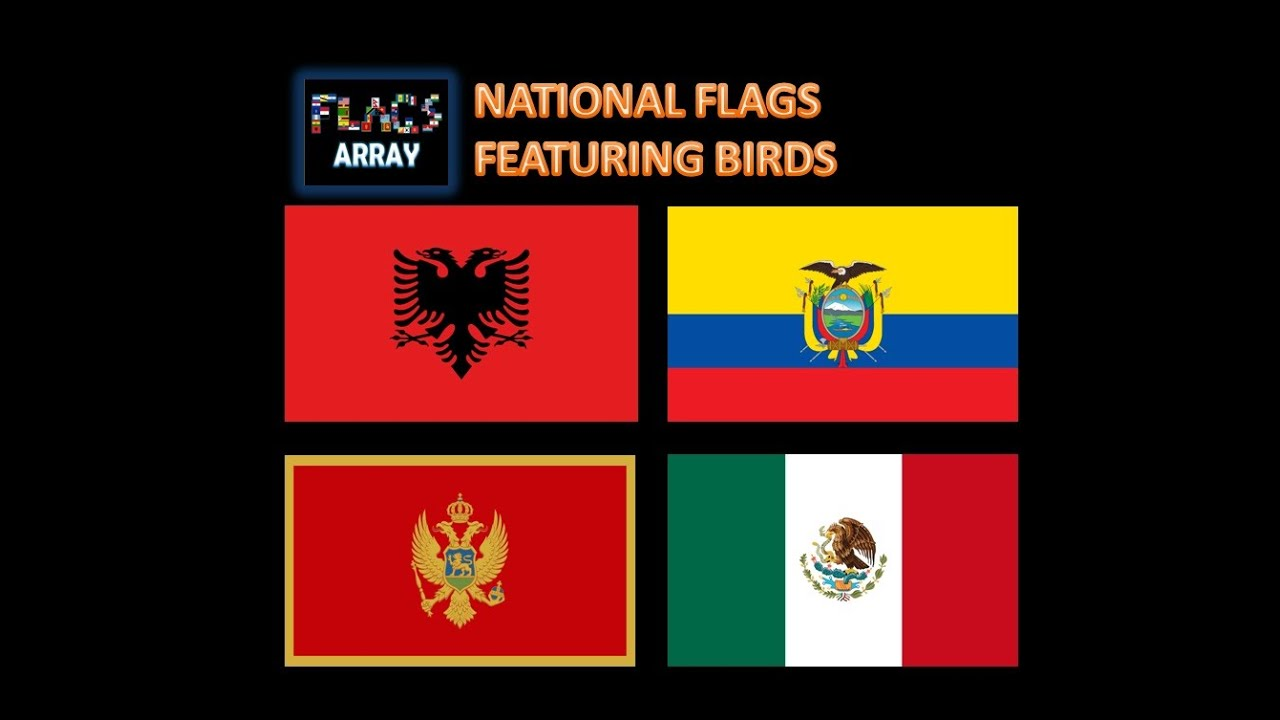 National flags featuring birds flags array albania montenegro national flags featuring birds flags array albania montenegro mexico much more youtube sciox Choice Image