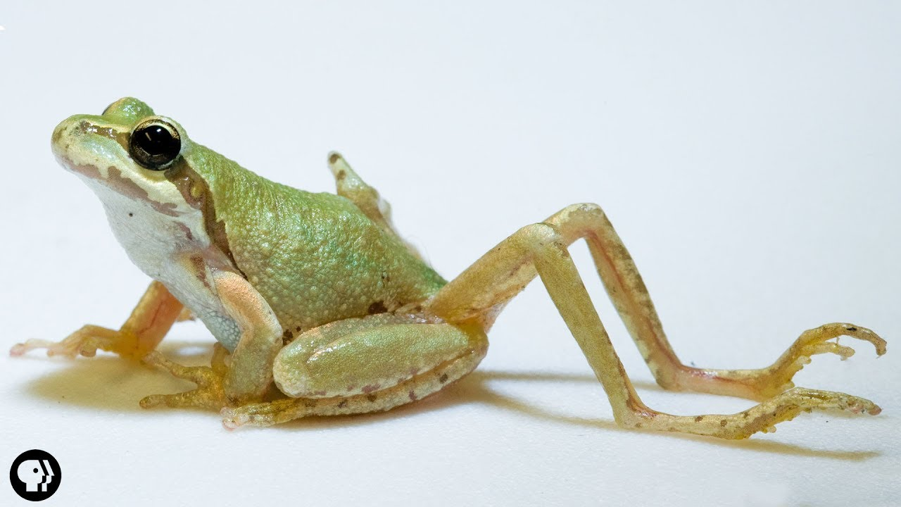 Why Does This Frog Have So Many Legs?!