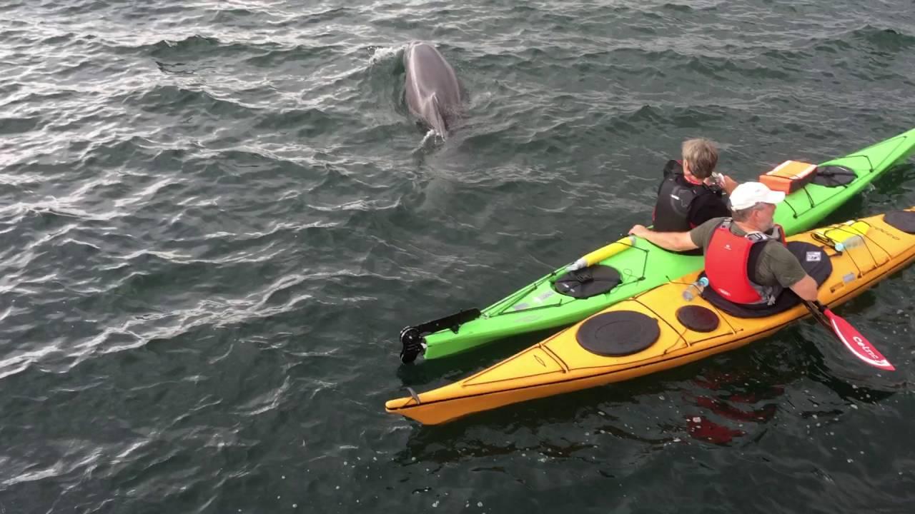 delfin fredericia