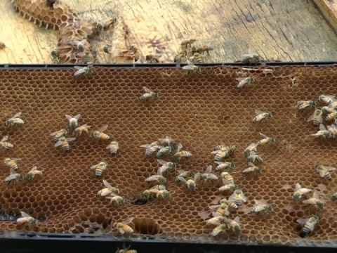 Beehive Thief Busted By Fresno Authorities