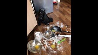 Что делает собака в отсутствии хозяина?...Черная Дженни.(Собака одна дома... Английский кокер спаниель., 2015-06-10T17:29:02.000Z)