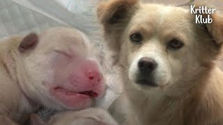 Pregnant Dog Had To Endure Pregnancy On Street In Absence Of Her Partner (Part 2) | Kritter Klub
