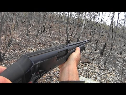 Hunting Pigs In The Drought Out Western NSW