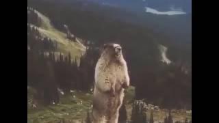 Даже животные иногда умеют говорить