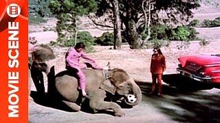 Tanuja Caught Rajesh Khanna With His Elephant - Haathi Mere Saathi Thumb